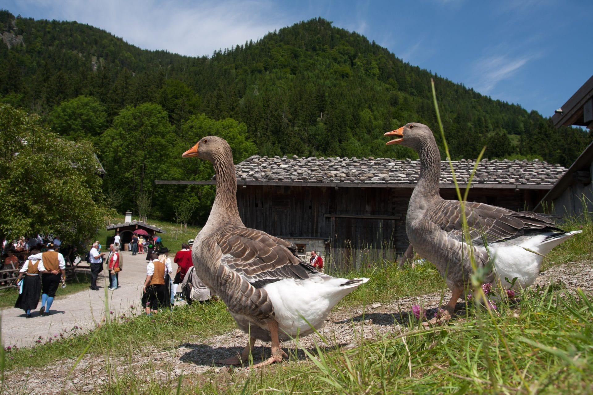 Bild-Nr.04-Tiere-Markus-Wasmeier-Freilichtmuseum-Schliersee