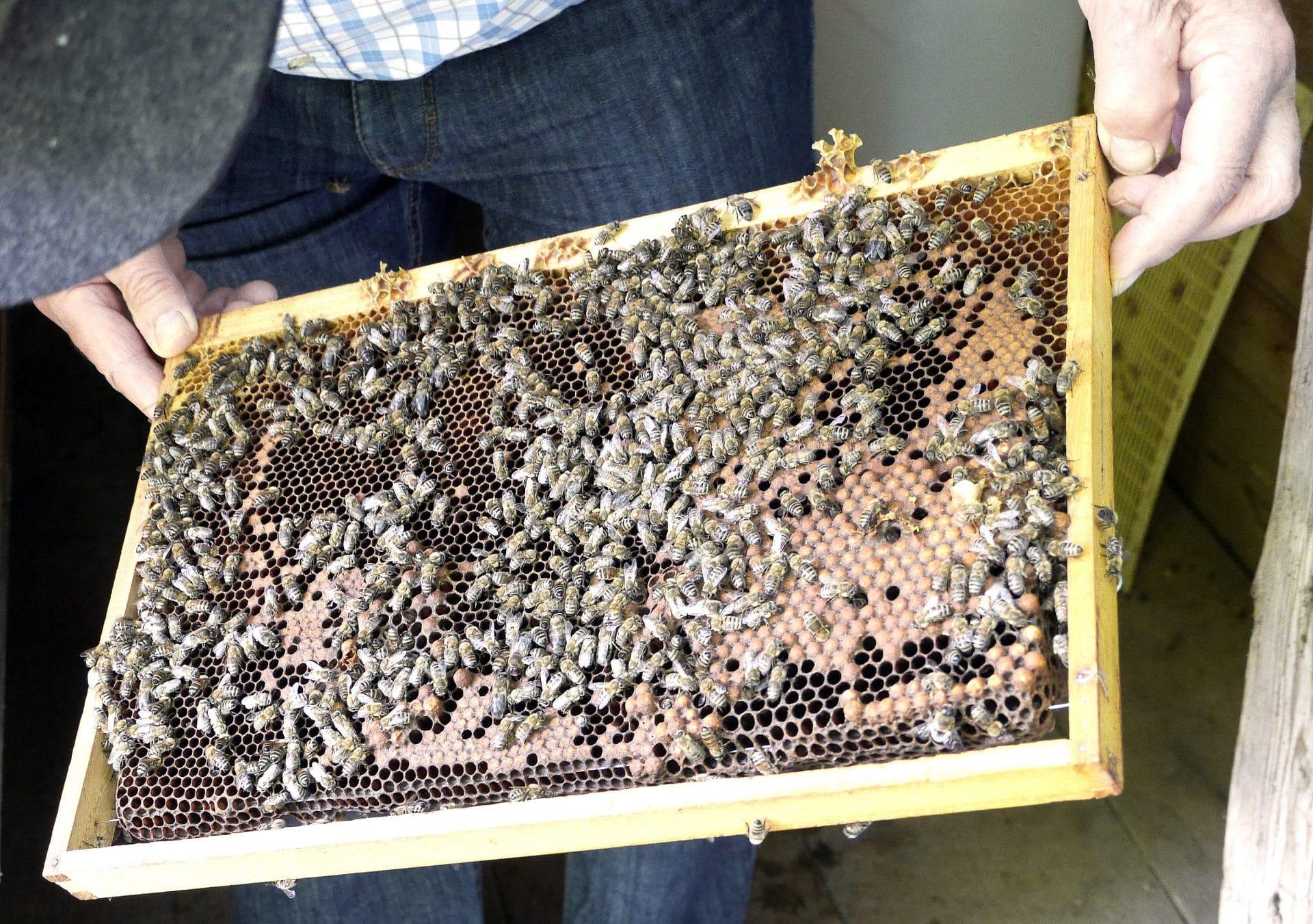 Bild.Nr_.2-Bienenhäuschen-Manfred-Kick